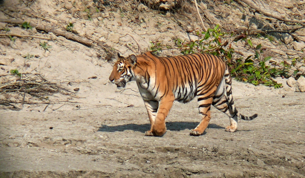 Nepal Wildlife Safari Tour with Lumbini Visit