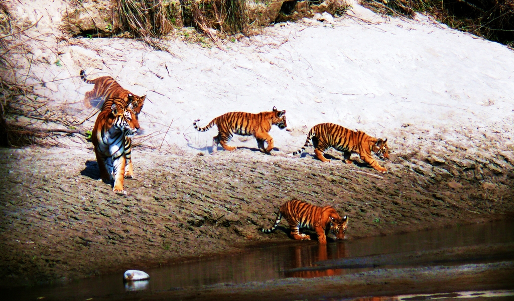Bardia National Park Wildlife Safari