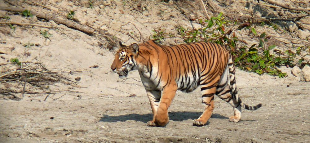 Nature and Wildlife Tour in Nepal